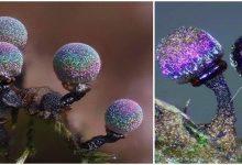 Photo of The Amethyst Mushroom Is Like A Galaxy