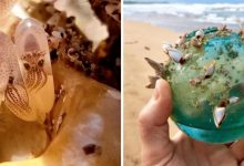 Photo of 19 Amazing Findings People Decided To Share On The Internet
