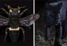 Photo of 10 Animals That Were Believed To Be Extinct Are Appearing On The Planet.
