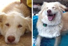 Photo of These Photos Show 18 Animals Before And After Their Adoption. They Found Energy And A Better Life