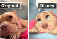Photo of 21 Adopted Animal Pictures That Were 'Disneyfied' To Show Their Happiness