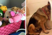 Photo of 15 Dogs Who Tried To Hide From Their Owners But Only Managed To Make Them Laugh