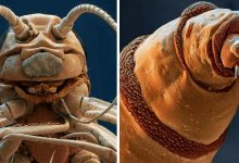 Photo of 19 Insects That Are Scary If You See Them Under The Microscope