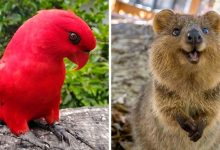 Photo of 15+ Animals That Demonstrate The Beauty And Diversity Of The Animal Kingdom
