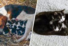 Photo of 20 Animal Moms With Their Young Or Foster Babies (Seeing Them Made The Day Sweeter)