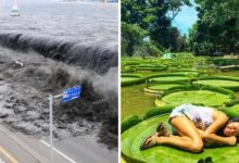 Photo of 20 images that show the incomparable power of nature