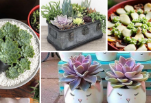 Photo of Everything you need to know about Succulents