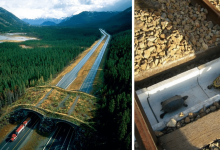Photo of 10 Surprising Structures That Were Built To Protect Wildlife