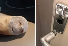 Photo of 14 Examples Of Pareidolia That Forced People To Stop To Photograph Them