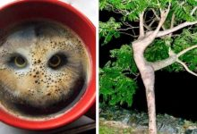 Photo of 15 Photos That Aren't What They Seem At First Distracted Glance