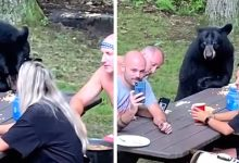 Photo of Hungry Bear Surprises Family On Quiet Picnic In The Woods