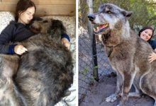 Photo of 15 Photos Of Dogs Who Don't Realize They're A Little Bulky
