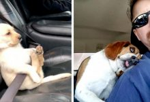 Photo of Dogs In The Car, 20 Hilarious Situations Where Owners Immortalized Their Doggies On Board