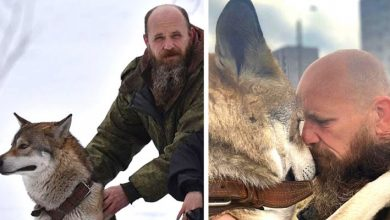 Photo of This Man Saved A Wolf From A Sad Fate, He Is Now His Magnificent Life Companion