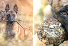 Photo of This Photographer Has Managed To Capture The Most Beautiful Moments Of The Unlikely Friendship Between A Dog And An Owl