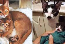 Photo of 15 Cats Who Don't Need DNA Testing To Prove They Are Parents And Children