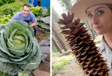 Photo of 15 Times Mother Nature Surprised Us With Her Inordinate Talent