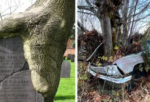 Photo of 20 Times Nature Took Back What Was Hers And Transformed Places And Objects In Fascinating Ways