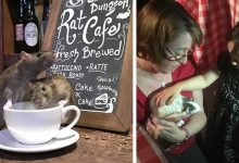 Photo of Have A Coffee Surrounded By Rats, This Bar Lets Dozens Of Rodents Roam Free Between The Tables