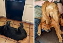 """Photo of 19 Times The Dogs """"Stopped"""" And Got Caught In The Most Hilarious Attitudes"""