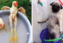 Photo of 15 Hilarious Photos Of Animals Who Learned To Survive The Summer Heat Much Better Than Us