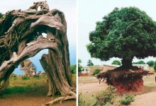 Photo of 20 Trees That Surprise Everyone With Their Will To Live
