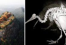 Photo of 18 Incredible Photos Of Unusual Things