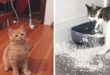 Photo of 21 Hilarious Photos Perfectly Demonstrate How Cats Are Four-legged Scoundrels