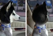 Photo of 16 Pet Groomers Who Should Be Fired