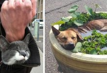 Photo of 16 Pets That Suddenly Fell Asleep In The Most Unthinkable Places