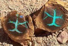 Photo of Australia, Found Rare Turquoise Opal Inside Petrified Wood: A Natural Wonder