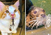 Photo of 21 Animals That Can Cheer Up Your Day Better Than Any Comedian
