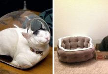 Photo of 20 Funny Photos Of Mischievous Cats Who Preferred To Sleep In Alternative Bunks With No Apparent Logic