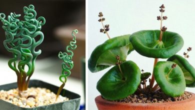 Photo of 13 Unusual Houseplants That Can Bring A Touch Of Life To Your Home