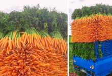Photo of 38 Strangely Satisfying Photos For Lovers Of Order