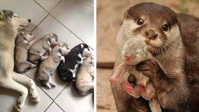 Photo of Motherly Love On All Fours, 17 Photos Of Moms With Their Beautiful Puppies