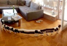 """Photo of 20 Times The """"Panoramic Photo"""" Function Has Generated Disturbing Masterpieces Of The Absurd"""