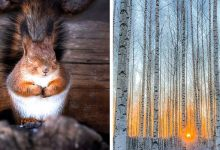 Photo of Photos Of This Talented Man Show All The Magic Of Finnish Forests