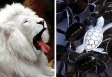 Photo of 15 Photos Of Albino Animals That Don't Need Other Colors To Be Extremely Fascinating