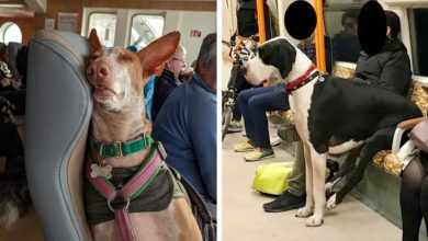 Photo of 16 Photos Of Animals On Public Transport That Look Much Better Behaved Than A Lot Of Humans