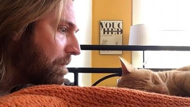 Photo of The Cat Wakes Him Up Every Night By Meowing, The Master Takes Revenge. The Video Is Hilarious
