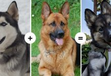 Photo of 15 Dogs With Fascinating And Unusual Characteristics Show The Result Of Crossing Different Genes