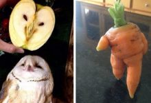 Photo of 15 People Immortalized Fruits And Vegetables So Strange They Seem To Have Come To Life