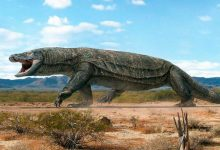 Photo of 10 Giant And Terrifying Animals That Lived After The Dinosaurs