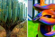 Photo of 18 Images That Show Nature As You Have Never Imagined It