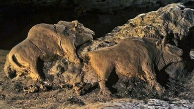 Photo of Two Bison Sculpted 15,000 Years Ago Have Been Found In A French Cave, They Are Perfectly Preserved