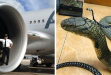 Photo of 17 Things That Turned Out To Be Bigger Than We Ever Imagined