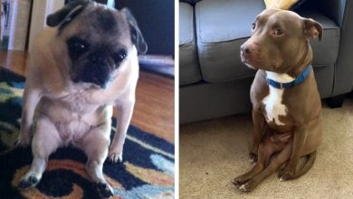 Photo of 14 Adorable Dogs Who Seem To Have Forgotten How To Sit.