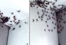 Photo of Mother Walks Into Daughter's Bedroom And Finds Dozens Of Spiders On The Walls