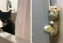 Photo of 19 Photos Of Cats Who Absolutely Do Not Care About Their Owners' Personal Space